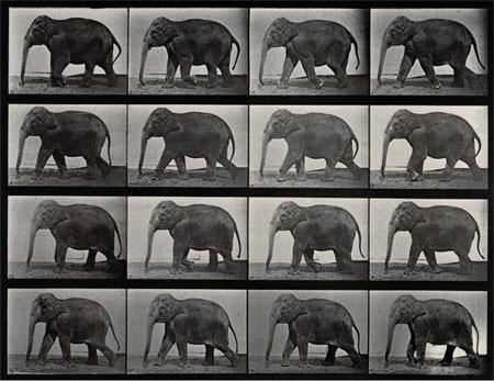 Eadweard Muybridge, An elephant walking, 1887. Wellcome Images