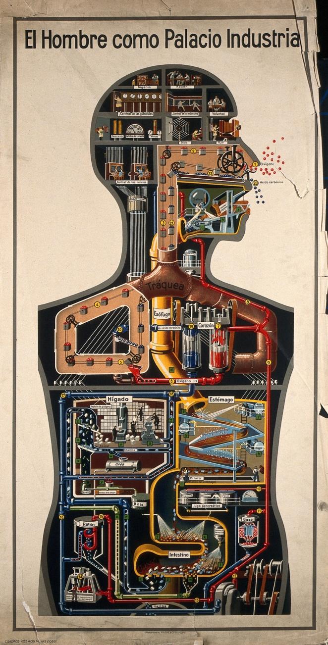 El hombre como palacio industrial. Lithograph, Fritz Kahn, 1930