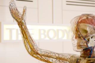 The Transparent Woman, Medicine Now