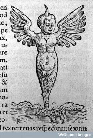 The monster of Ravenna, 1554.