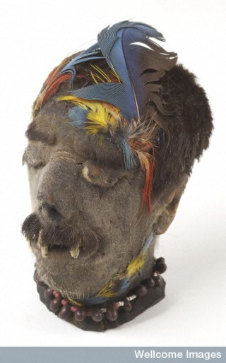 A Shuar shrunken head (tsantsa) from Ecuador.