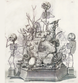 Tableau with Three Foetal Skeletons, from Frederik Ruysch, Opera omnia..., Amsterdam: Janssonius Waesbergen, 1721-1727. Courtesy of the New York Academy of Medicine Library.