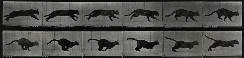 A cat running. Photogravure after Eadweard Muybridge, 1887.