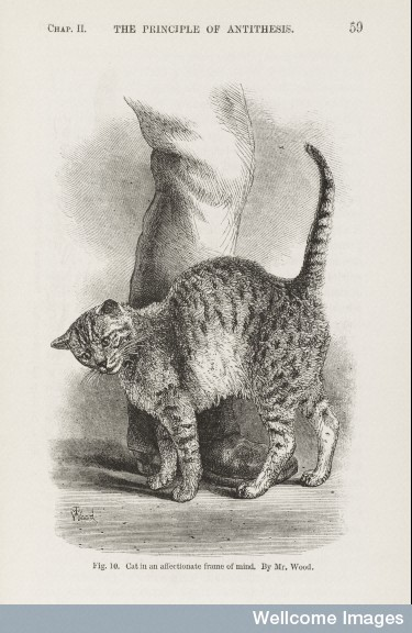 Illustration from The Expression of the  Emotions in Man and Animals by Charles Darwin, 1872.