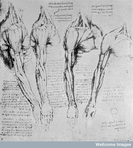 Leonardo da Vinci the anatomist .
