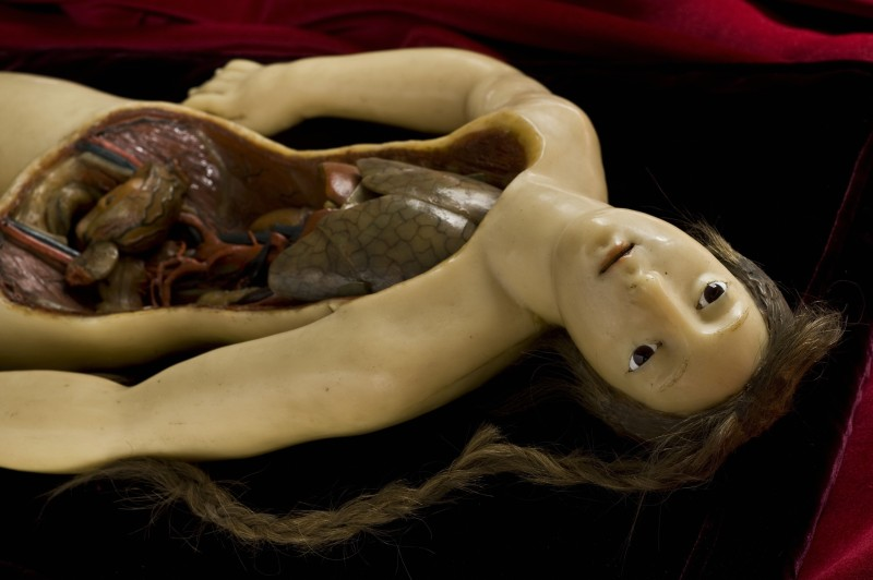 Wellcome Collection's Anatomical Venus. Courtesy of Wellcome Images.