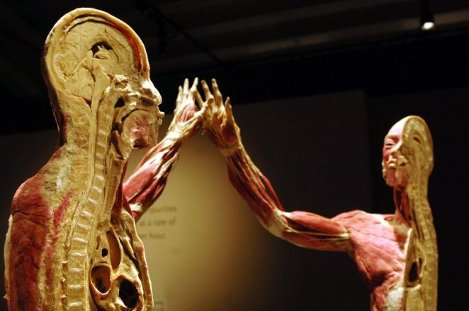 Body Worlds exhibition (image credit: Premier Exhibitons).