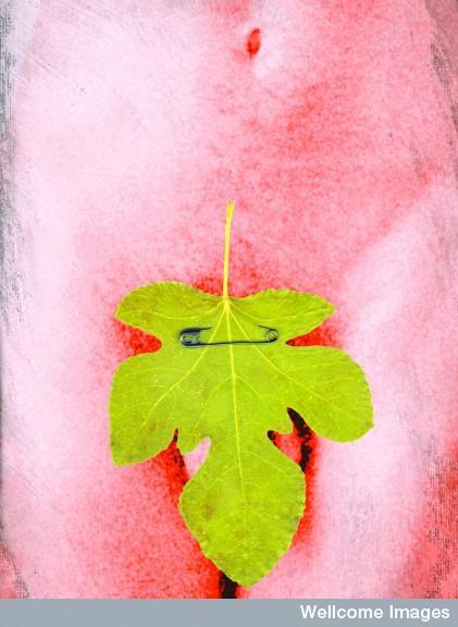 Artwork of fig leaf covering male genitals (Credit: Nanette Hoogslag.)