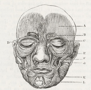 The Muscles of Facial Expression by Charles Bell 1806.