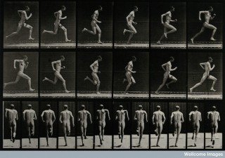 """A man sprinting."" Photogravure after Eadweard Muybridge, 1887. Courtesy of Wellcome Images, London."