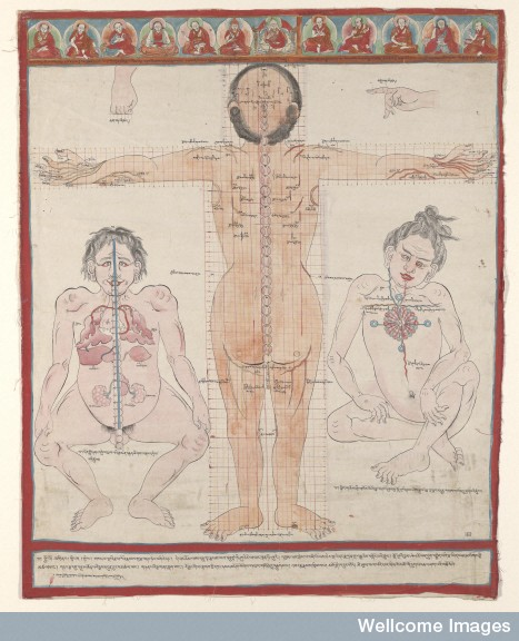 L0078928 The Interconnecting Blood Vessels: Back View (Thangka 10)