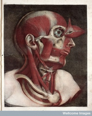 L0023739 J.F. Gautier d'Agoty, Myologie complette en coleur... Credit: Wellcome Library, London. Wellcome Images images@wellcome.ac.uk http://wellcomeimages.org Facial muscles. Myologie complette en couleur et grandeur naturelle... Jacques Fabien Gautier d'Agoty Published: 1746 - 1748 Copyrighted work available under Creative Commons Attribution only licence CC BY 4.0 http://creativecommons.org/licenses/by/4.0/