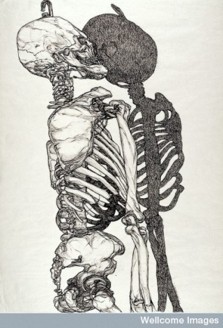 L0027998 A skeleton and its shadow. Pen and ink drawing by Joyce Cutl