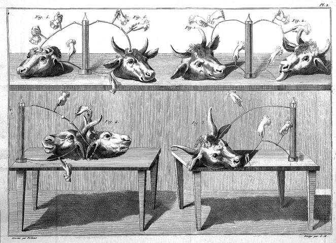 Animals – either alive, or dead, and often dissected - were routinely used in various Galvanic experiments.