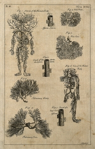 This is an 18th century engraving of arteries and veins, which was used to illustrate an entry in an encyclopedia. Image credit: Wellcome Library.