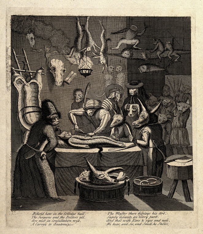 "A cat in a feathered turban, and with human hands, disembowels one of its own, watched by various other animal-headed humans. The verse on this engraving from the early 18th century reads: ""Behold how in the colledge hall, the surgeons and the doctors all, are met in consultation wise, a carcase to anatomize."""